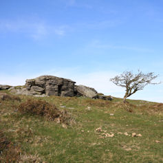 A tree and a rock formation on a hillside against a blue sky