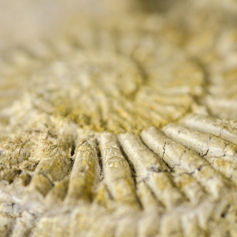 Close up of a fossil