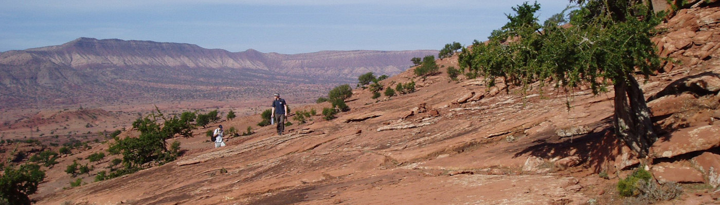 Desert with scrub trees and researchers in background